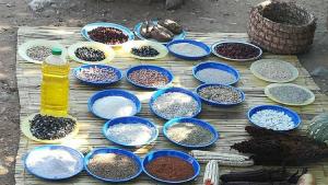 transgressive learning Mashonaland East organic farmers