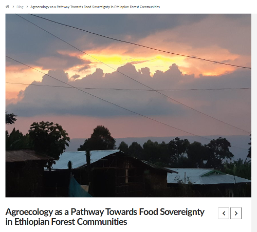Belay, M.2019. Agroecology as a Pathway Towards Food Sovereignty in Ethiopian Forest Communities. Agroecology Now